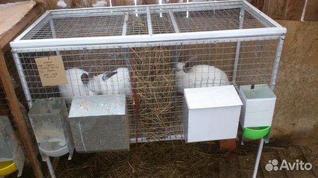 Купить на авито клетку для кроликов