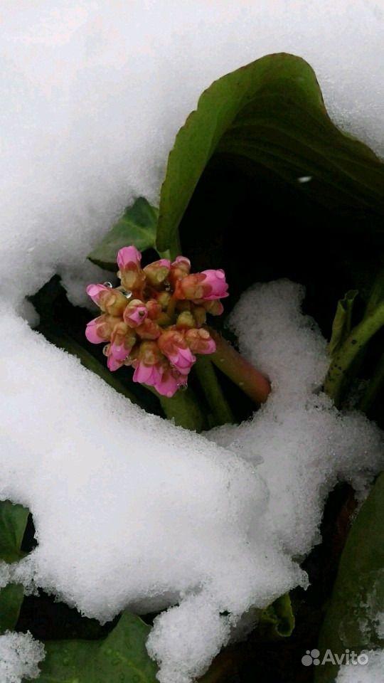 Растения купить на Зозу.ру - фотография № 6