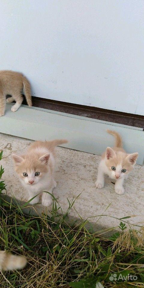 Отдам котят в Анапе - фотография № 4