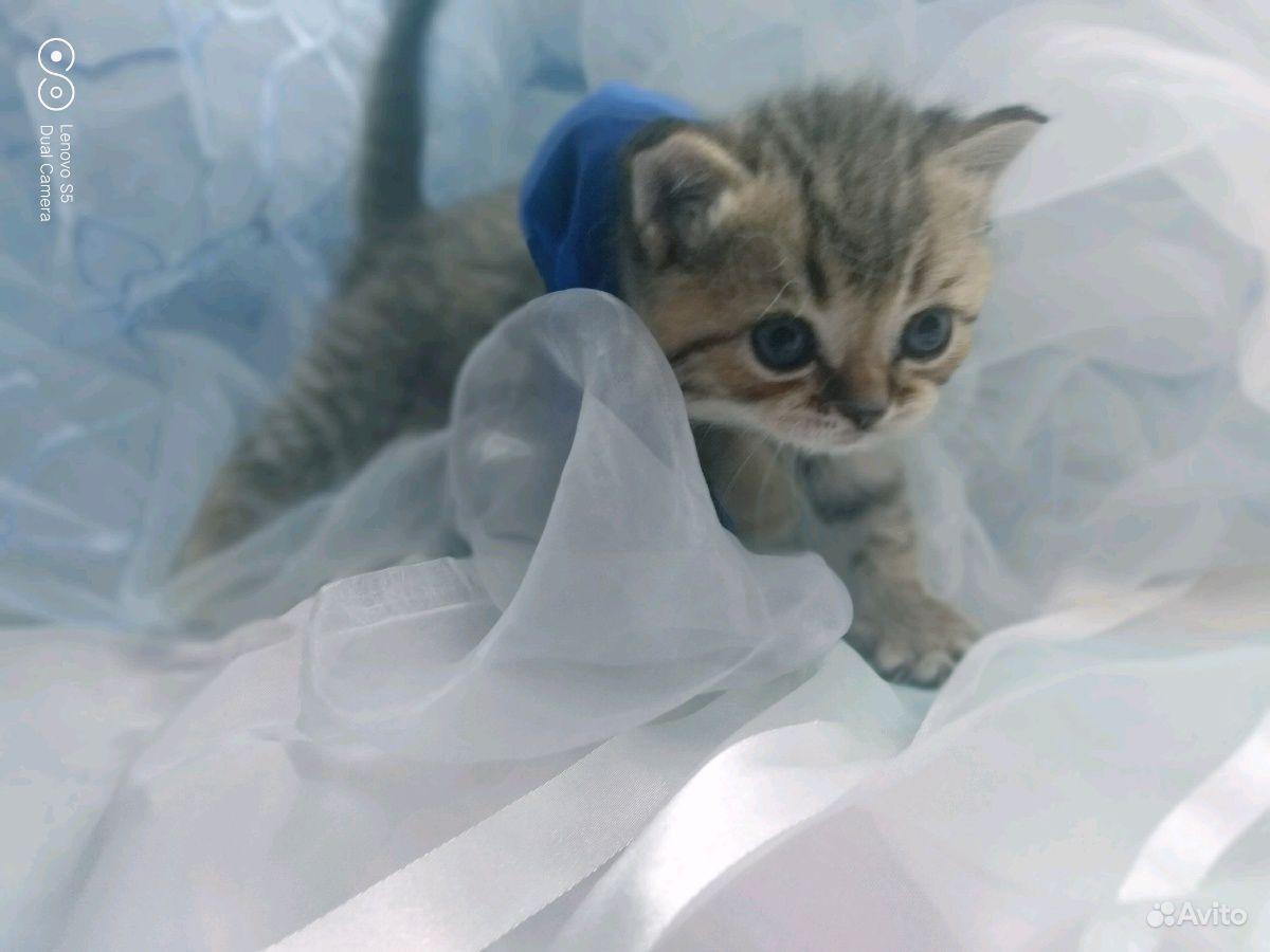 Котята в Новочебоксарске - фотография № 3
