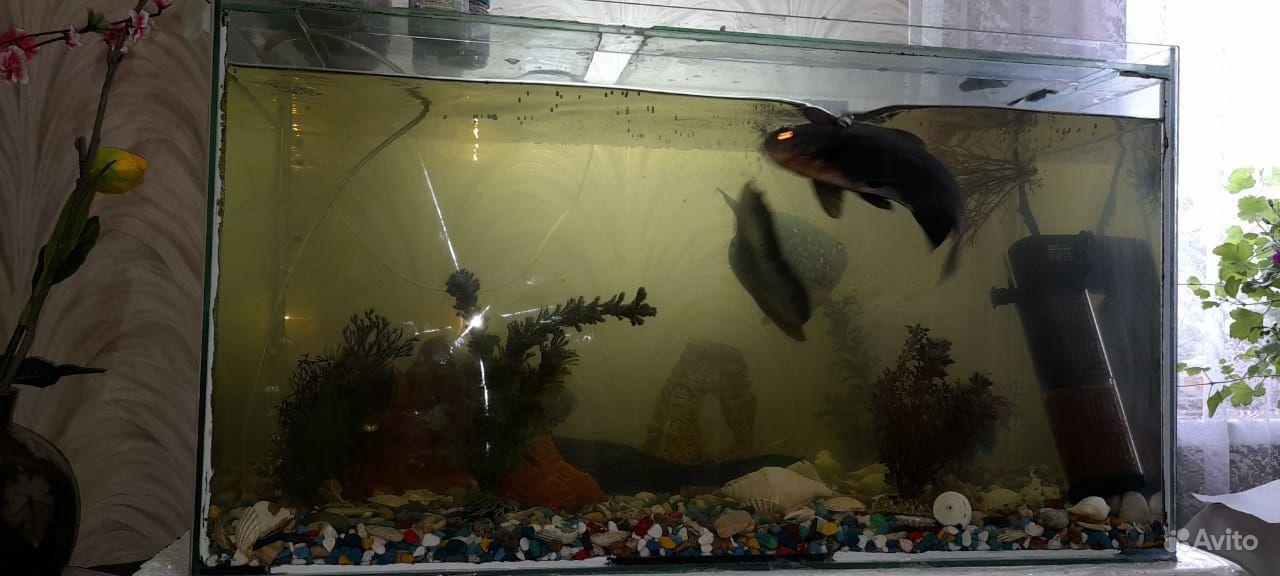 Рыбы с аквариумом и всеми удобствами для них купить на Зозу.ру - фотография № 4