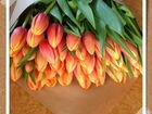 купить тюльпан в спб
