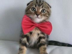 Куплю кота в чебоксарах
