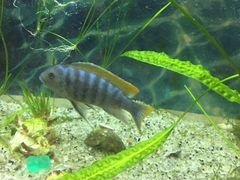 Рыба хищник