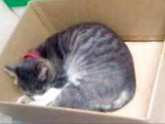 Очаровательный добрейший котик в дар