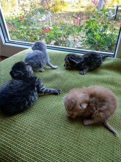 Новорожденные котята готовятся обрести дом