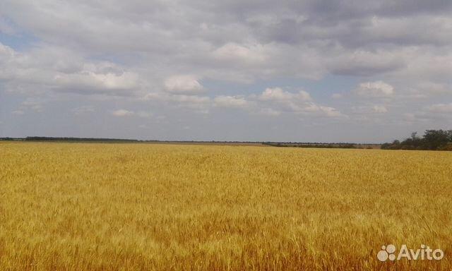 его аренда земли сельскохозяйственного назначения в крыму ним был
