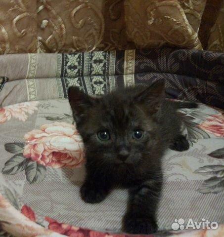 Объявление отдам котенка санкт петербург подать объявление онлайн уфа преподаю уроки