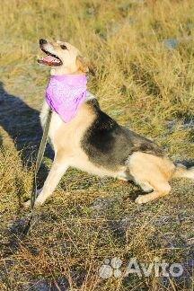 Необыкновенная собака в дар купить на Зозу.ру - фотография № 9