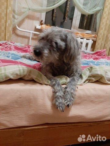 Собачка в добрые ручки купить на Зозу.ру - фотография № 7