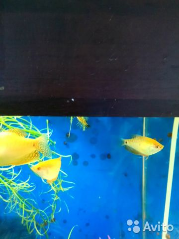 Рыба 89050801560 купить 1
