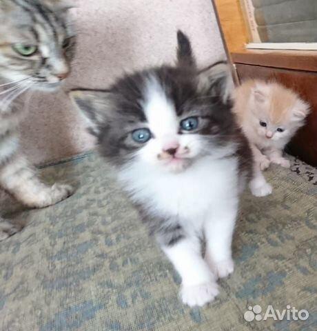 Котята в добрые руки  89272793404 купить 5