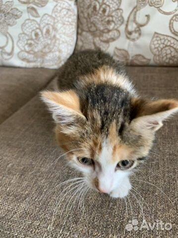 Кошка  89842775312 купить 2