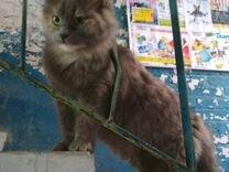 Ласковая Кошечка ищет дом