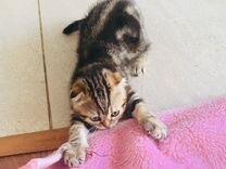 Котенок девочка 2 месяца
