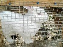 Кролик вязка