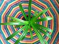 Комнатные цветы Панданус