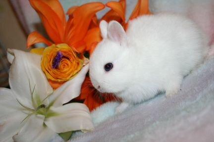 Фиксированная цена. вет. документы. мини кролики