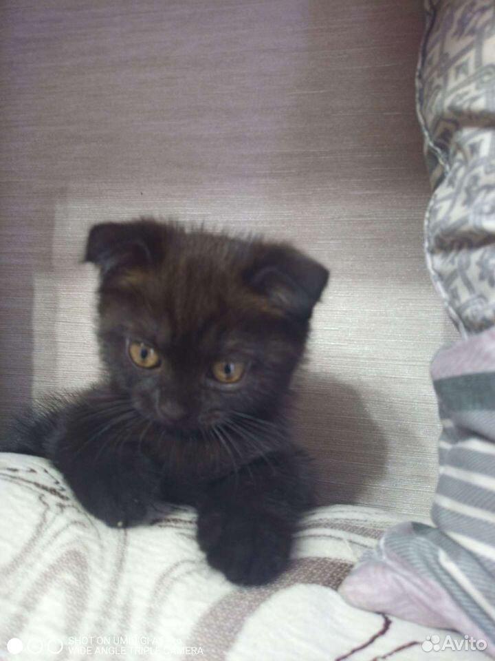 Кошка  89511303870 купить 1