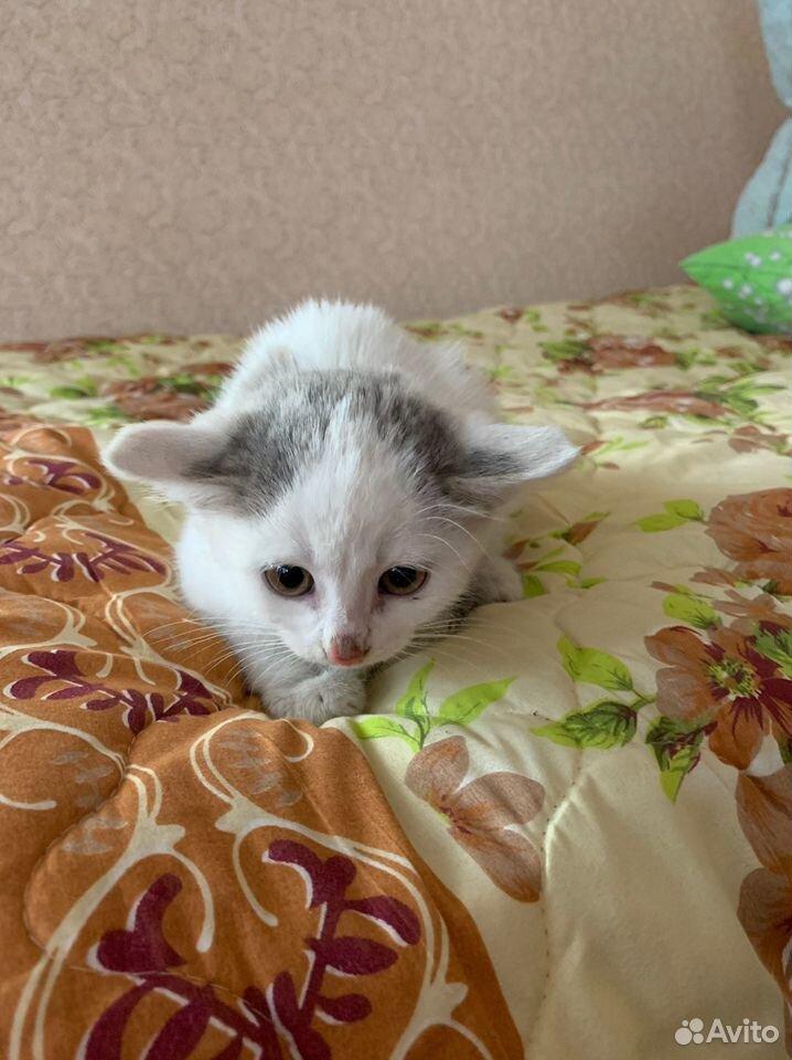 Котята в добрые руки бесплатно  89876955069 купить 5