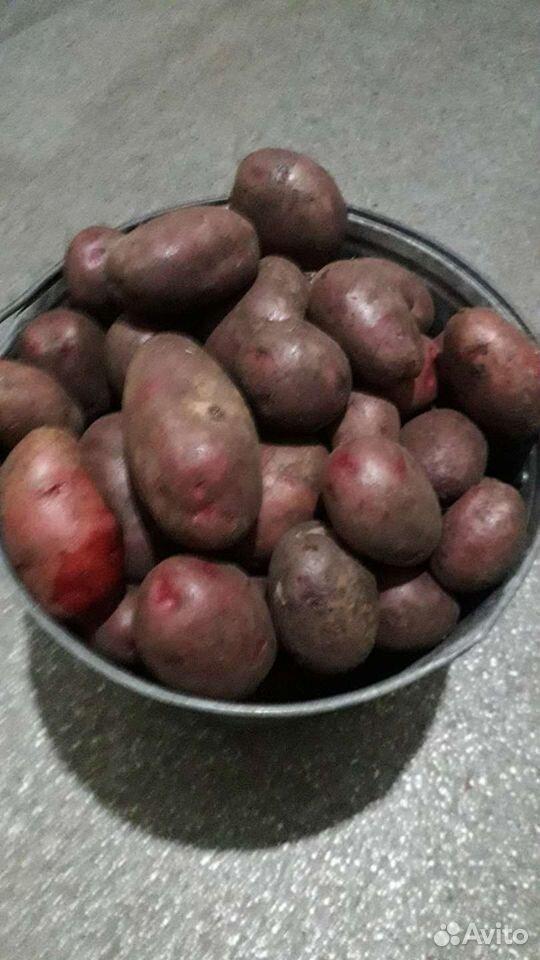 Kartoffeln  89532618366 kaufen 2