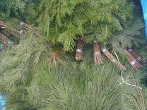 Веники пихтовые и кедровые