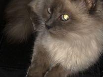 Кошечка Шанель