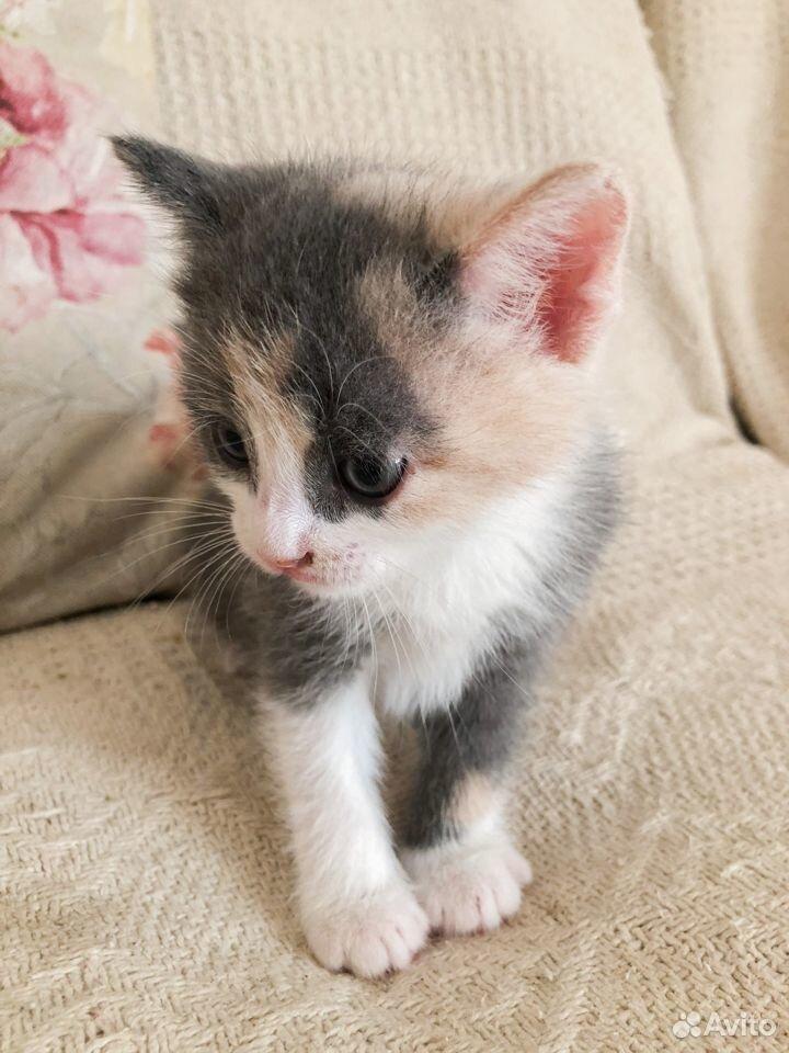 Котенок  89201002908 купить 1
