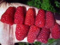 Плодовые,ягодные,декоративные культуры для Сибири