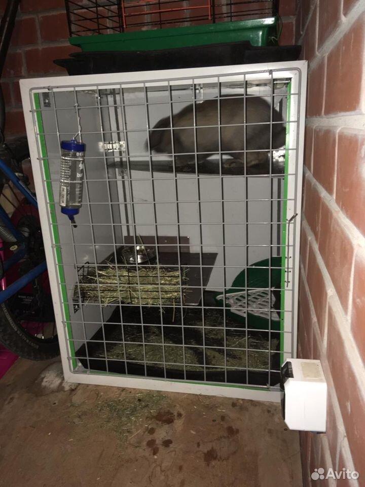 Клетка с кроликом  89121139776 купить 2